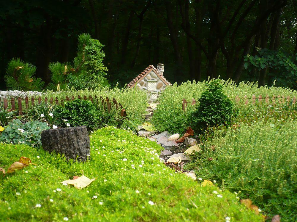 The Little Meadowlark