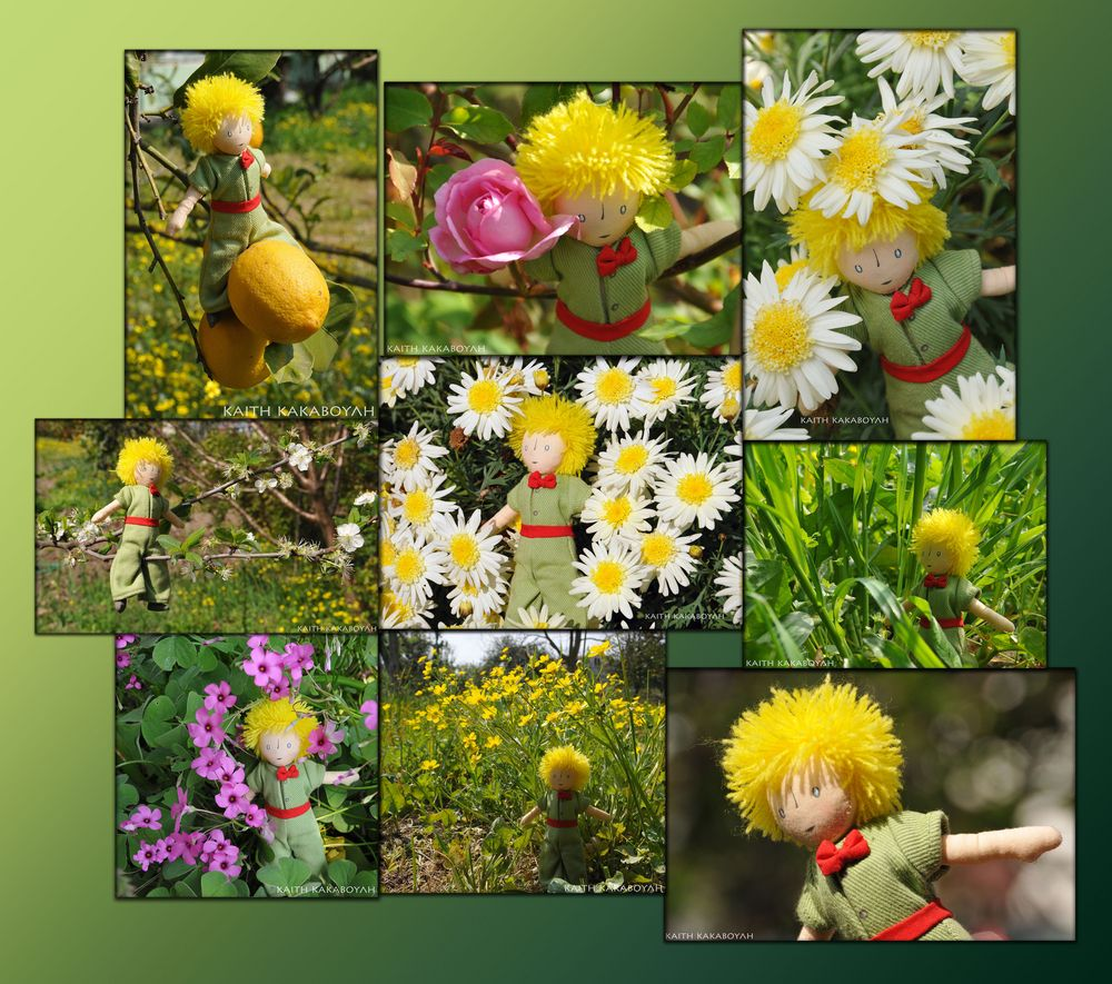 the little prince visited my garden last spring.....