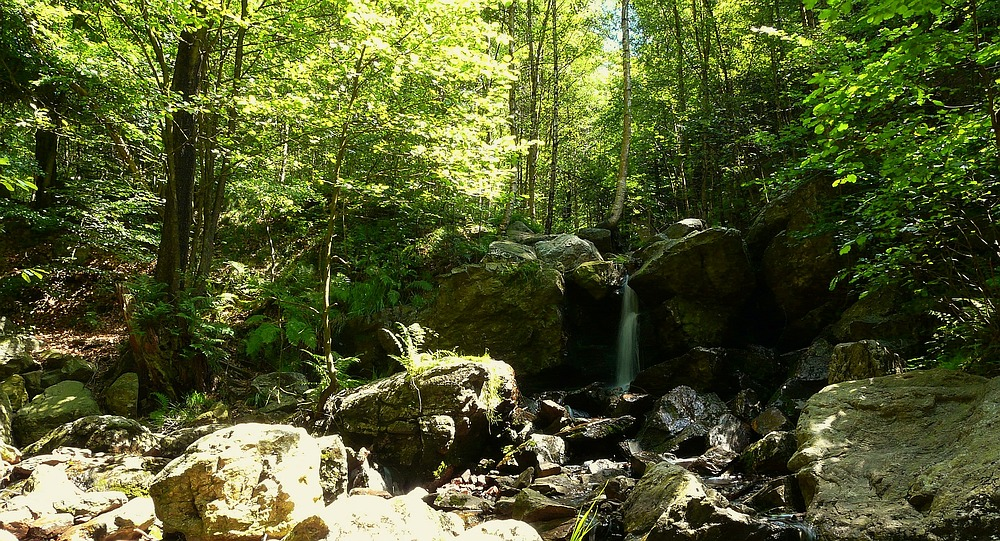 The Living Forest (3) : waterfall
