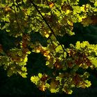 The Living Forest (341) : First sign of Autumn