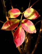 The Living Forest (433) : First sign of Autumn