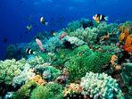 The Living Sea I