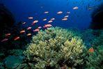 The Living Sea II