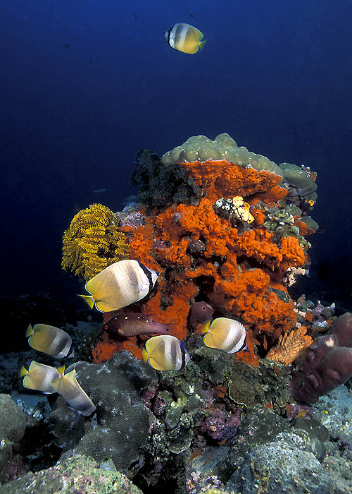 The Living Sea III