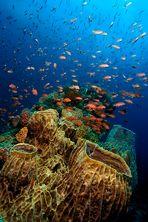 The Living Sea IV