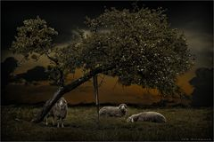 """"""" the loneliness of the sheep """""""