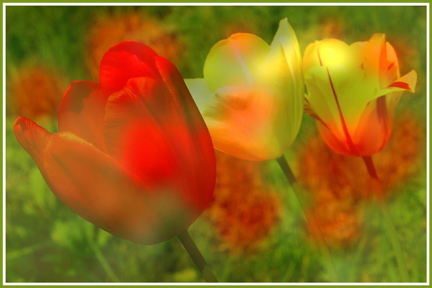 The magic of springtime