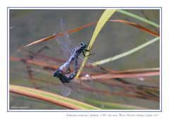 The mating season - La stagione degli amori