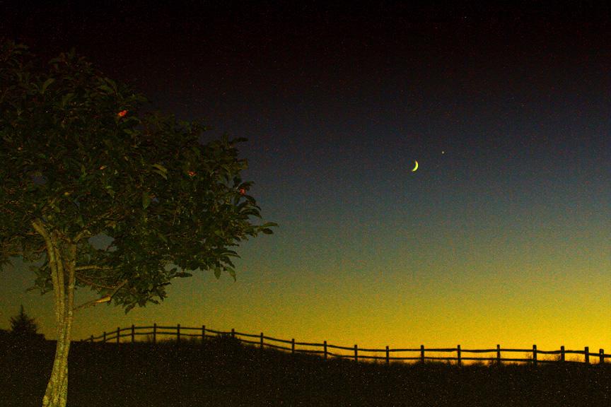 the meeting of moon & venus by the apple tree