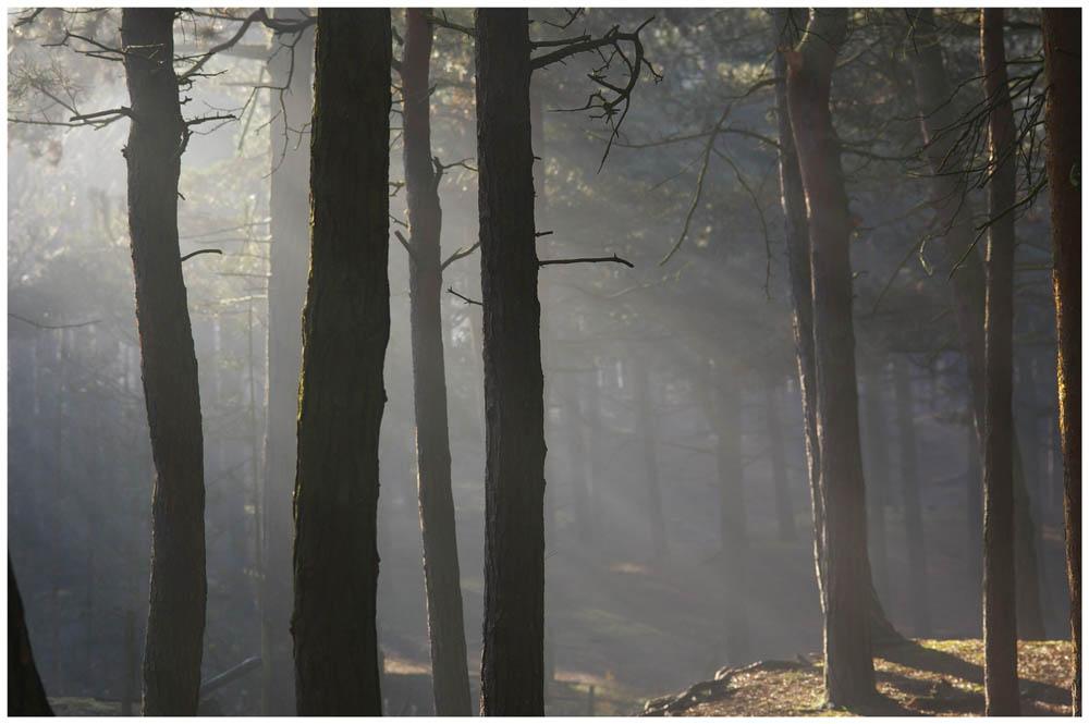 the mist lifts