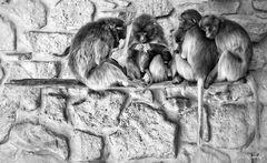The monkey community