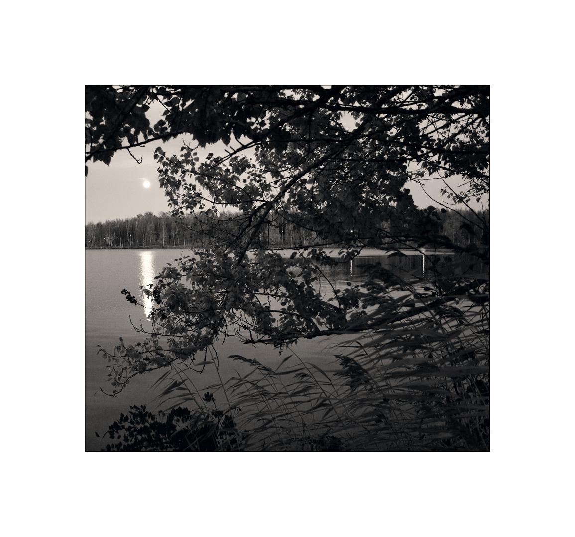 The moon over the trees - Vaasa
