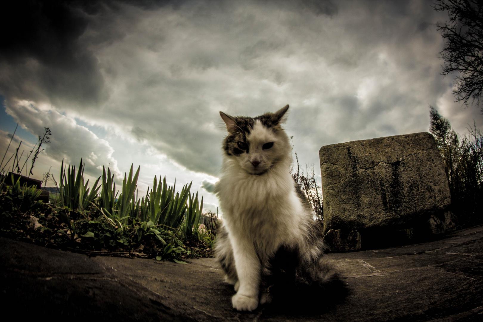 The Mystic Cat