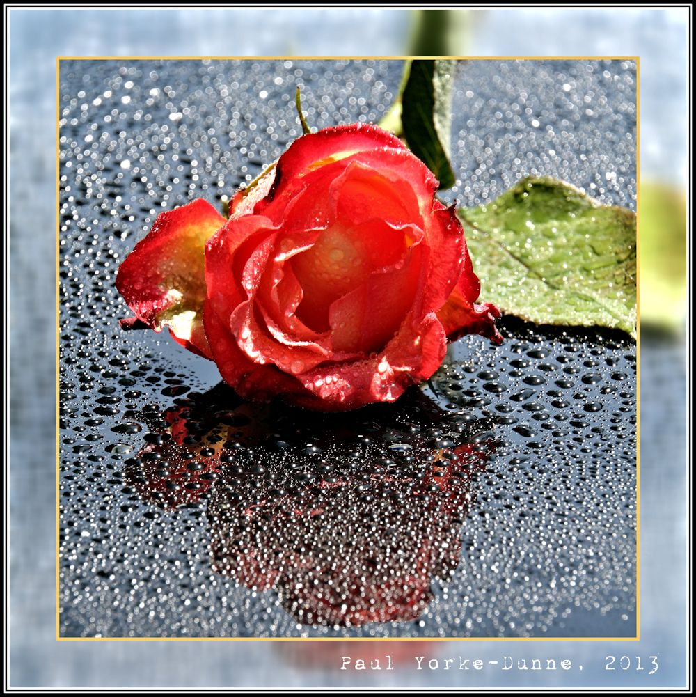 The Name of the Rose.....