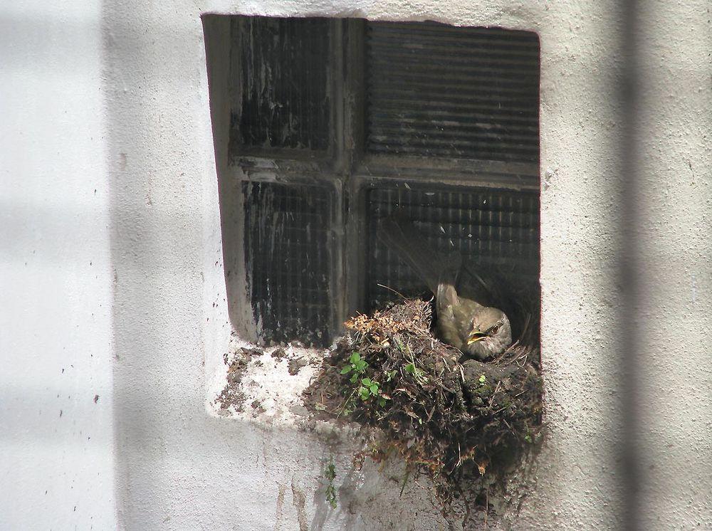 The nest - El nido