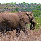 The nice elephant