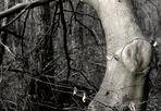 The O Tree (Alternate)
