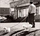THE OLD DOG WALKER