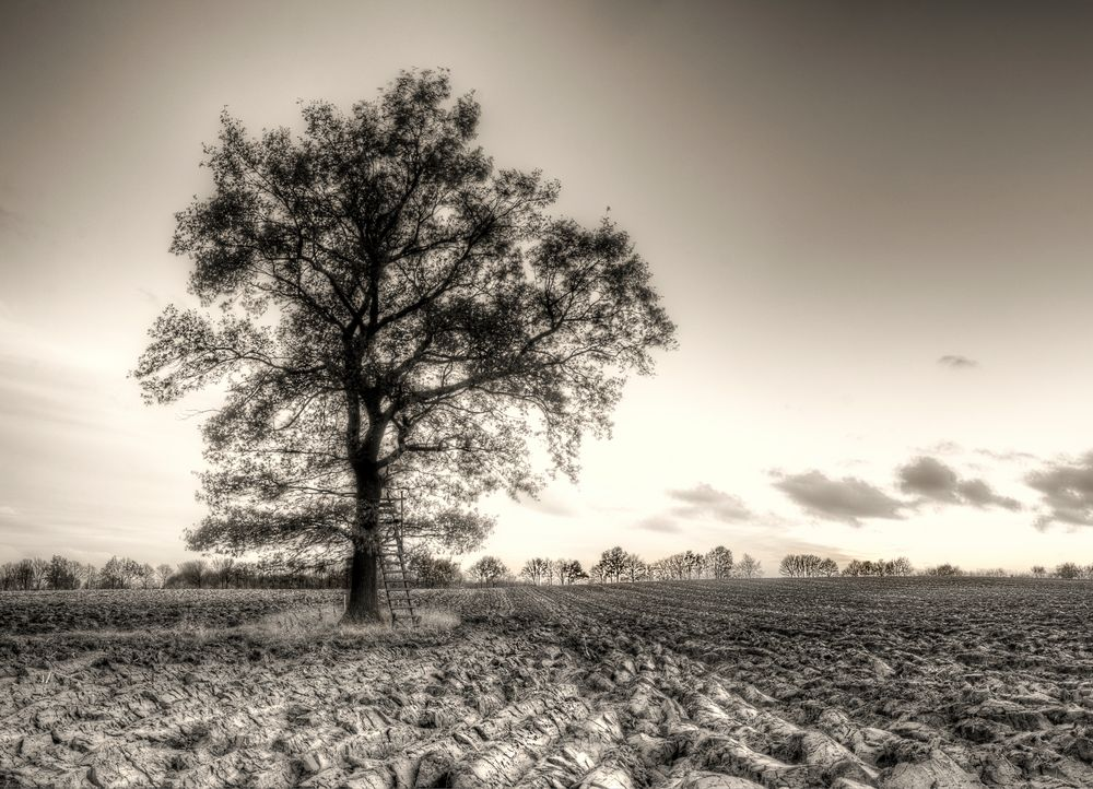 The Old Hanging Tree ...