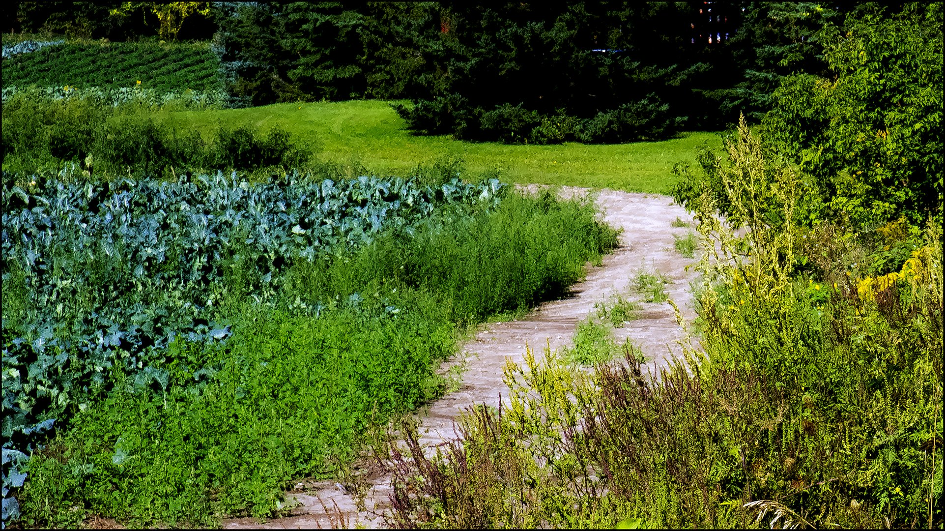 THE OVERGROWN PATH