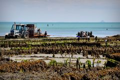 The oyster harvest from the pier at Cancale, Brittany