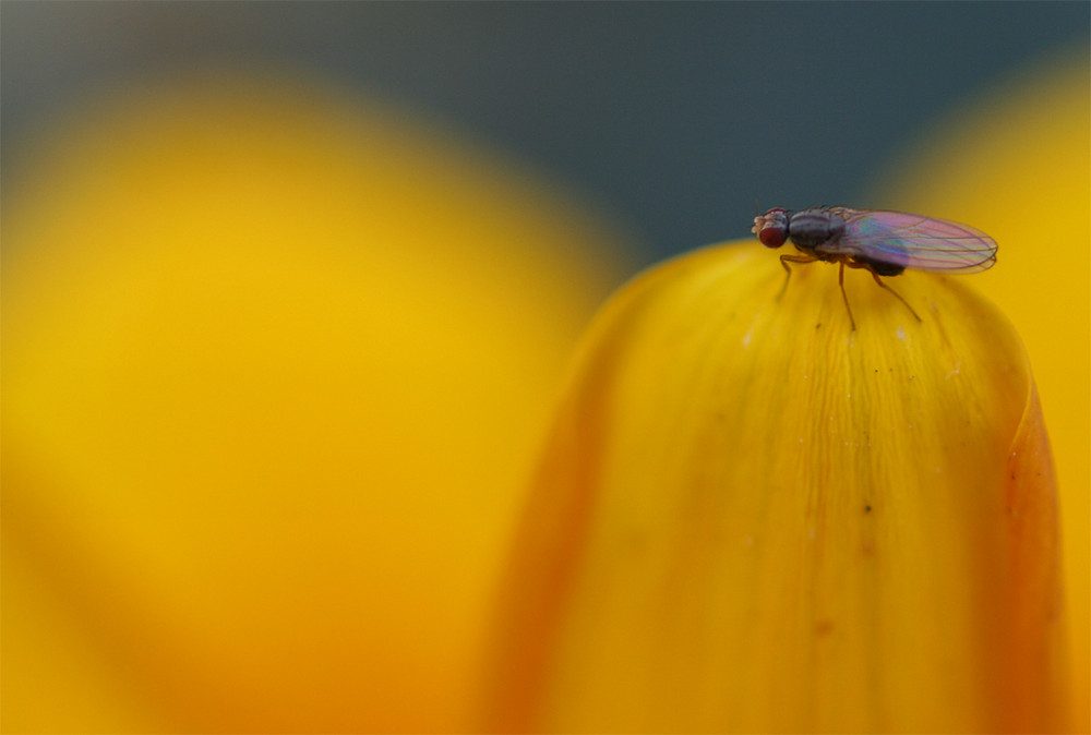 The Psicadelic Fly On The Yellow Planet
