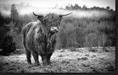 the real Highlander