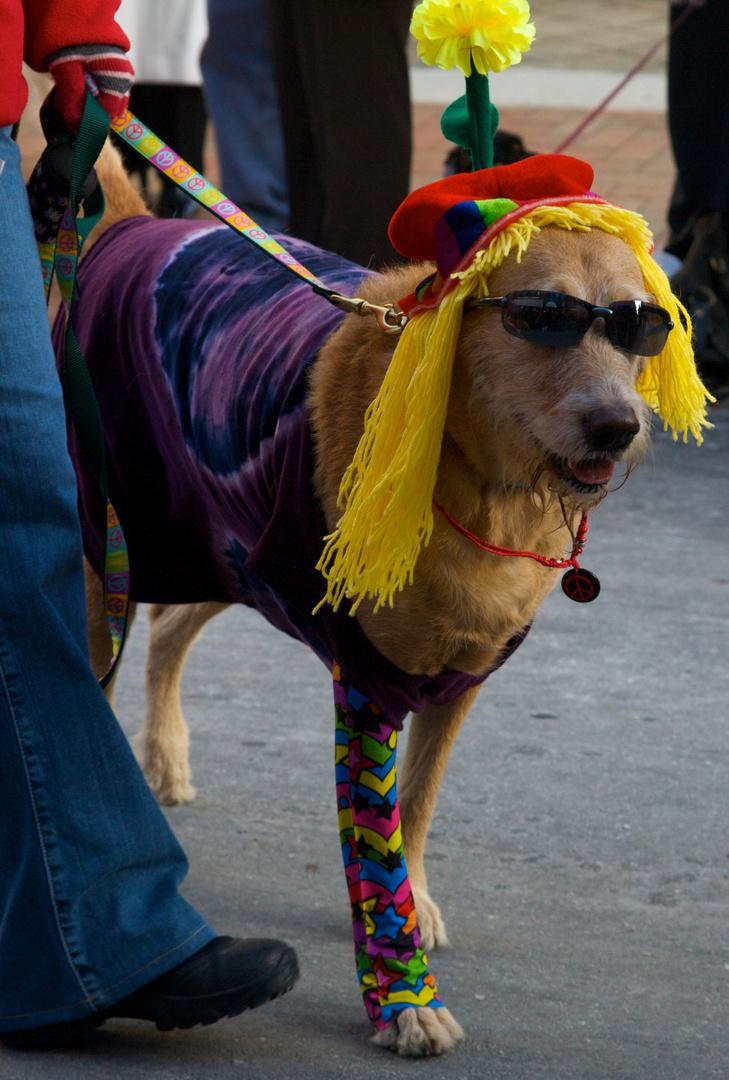 The Reindog Parade 2009