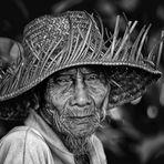 The Rice Farmer