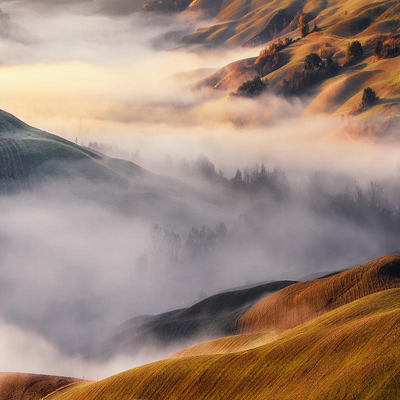 The Rising Fog