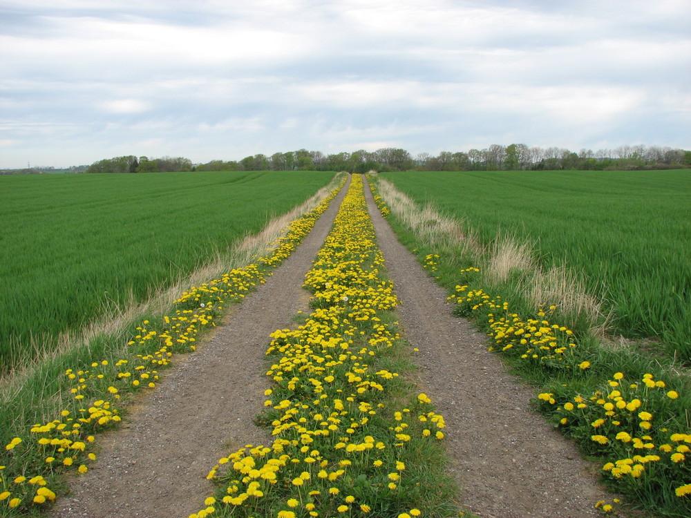 The road in Spring in Denmark