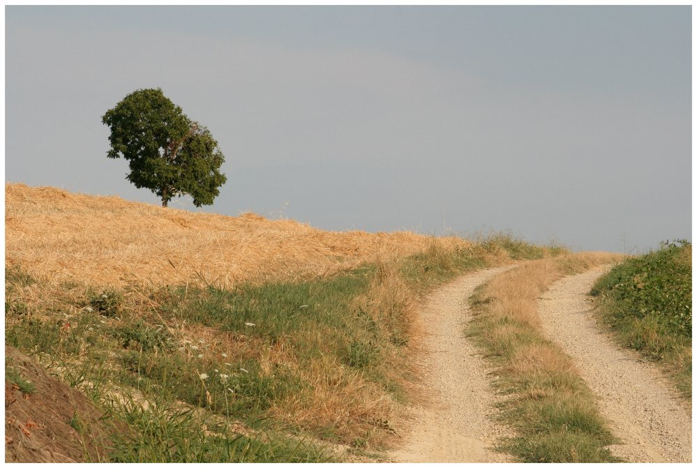 The road through the hay