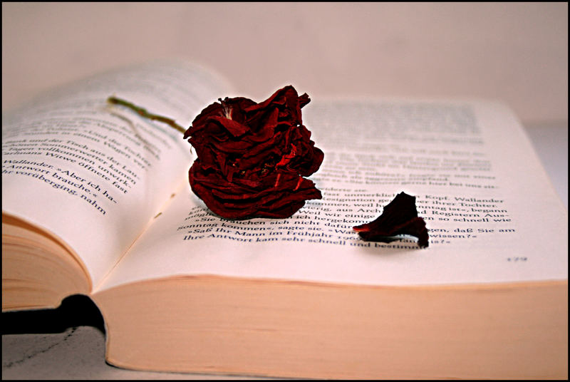 .The rose.