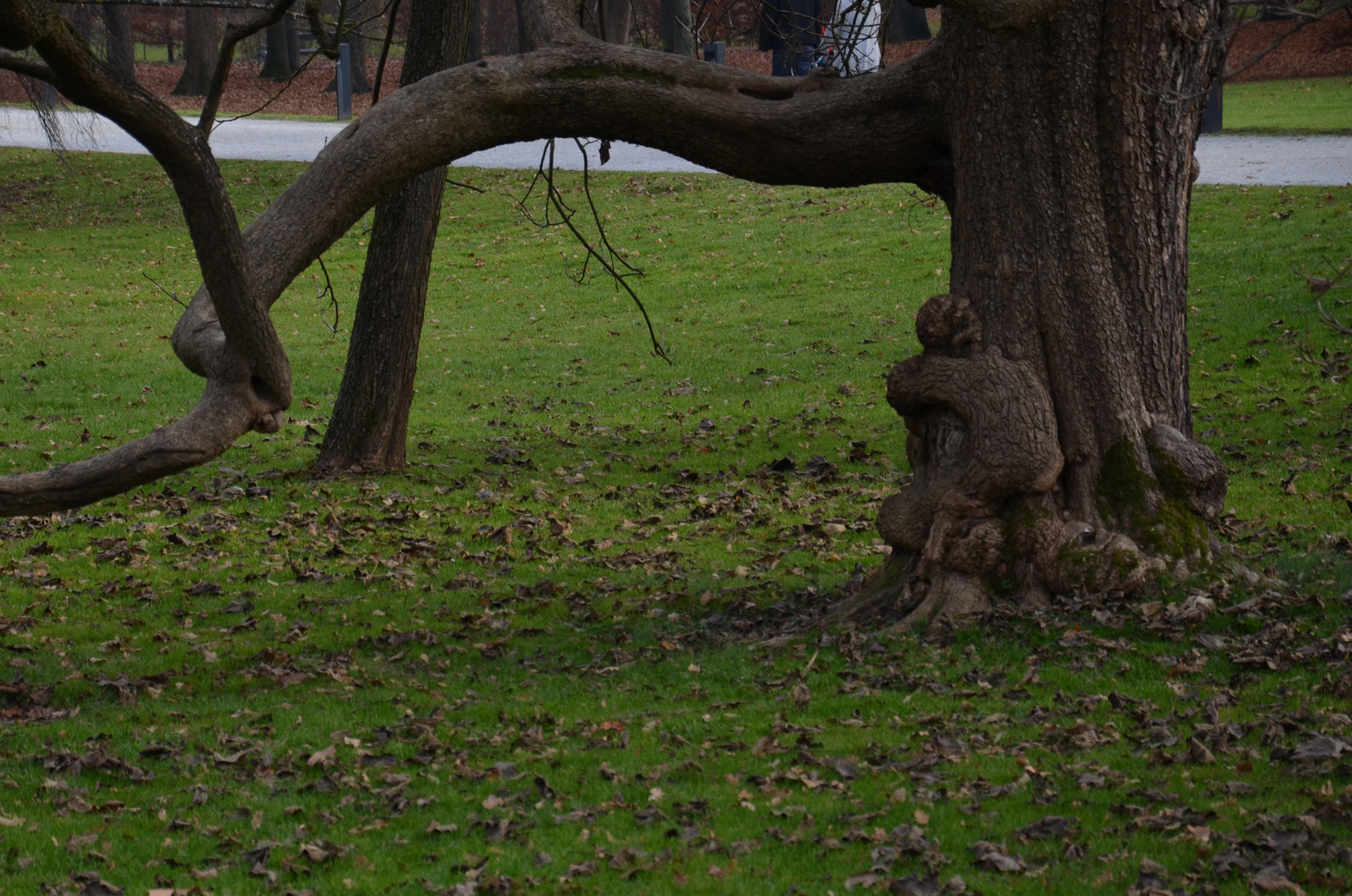 The sad little girl and the tree