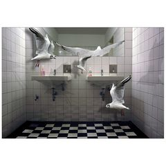 the seagulls