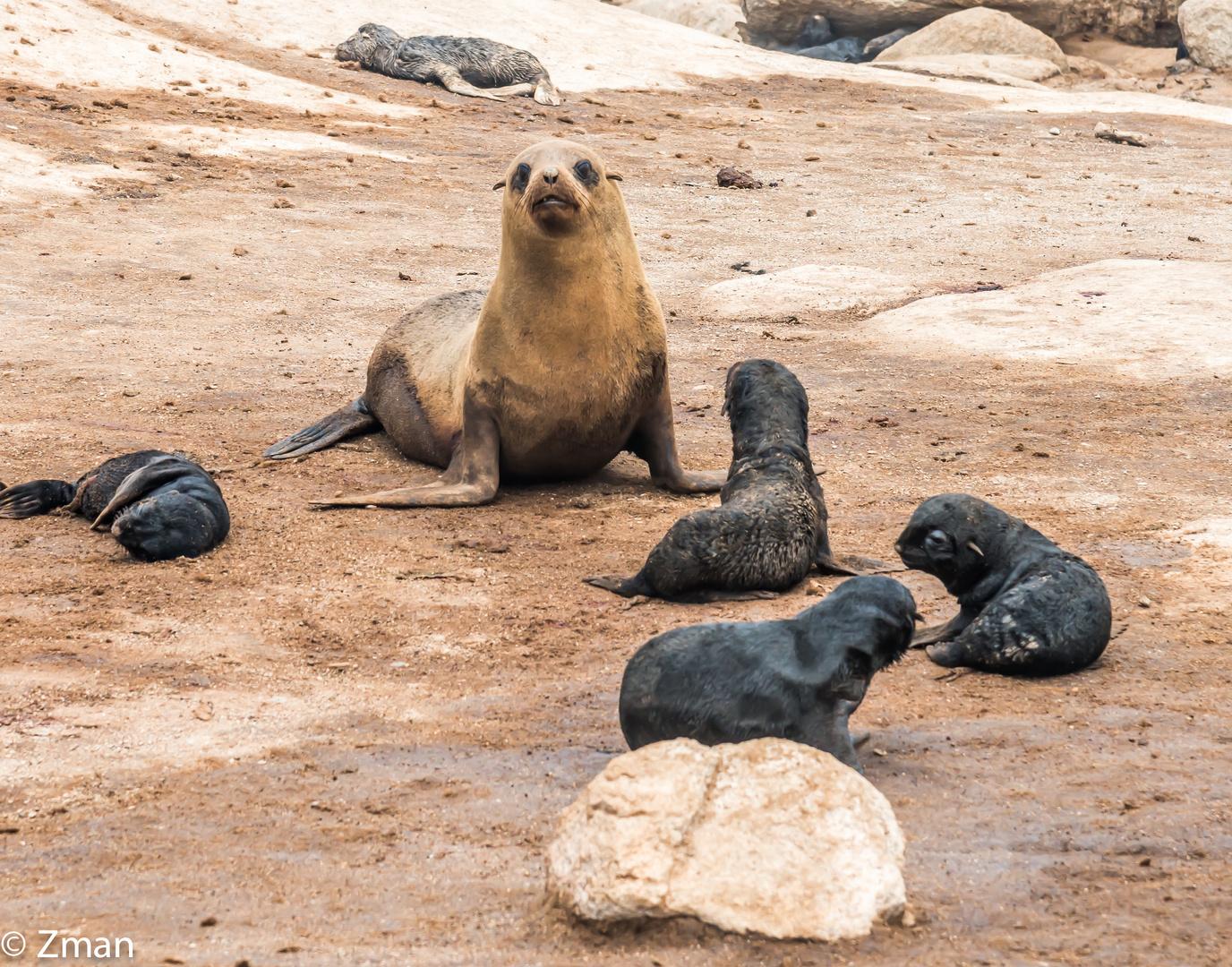 The Seal Refuge 01