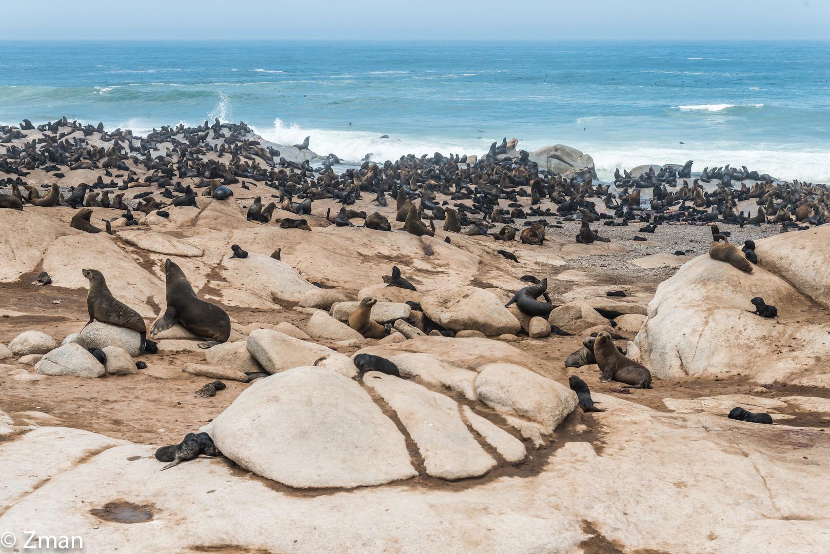The Seal Refuge 03