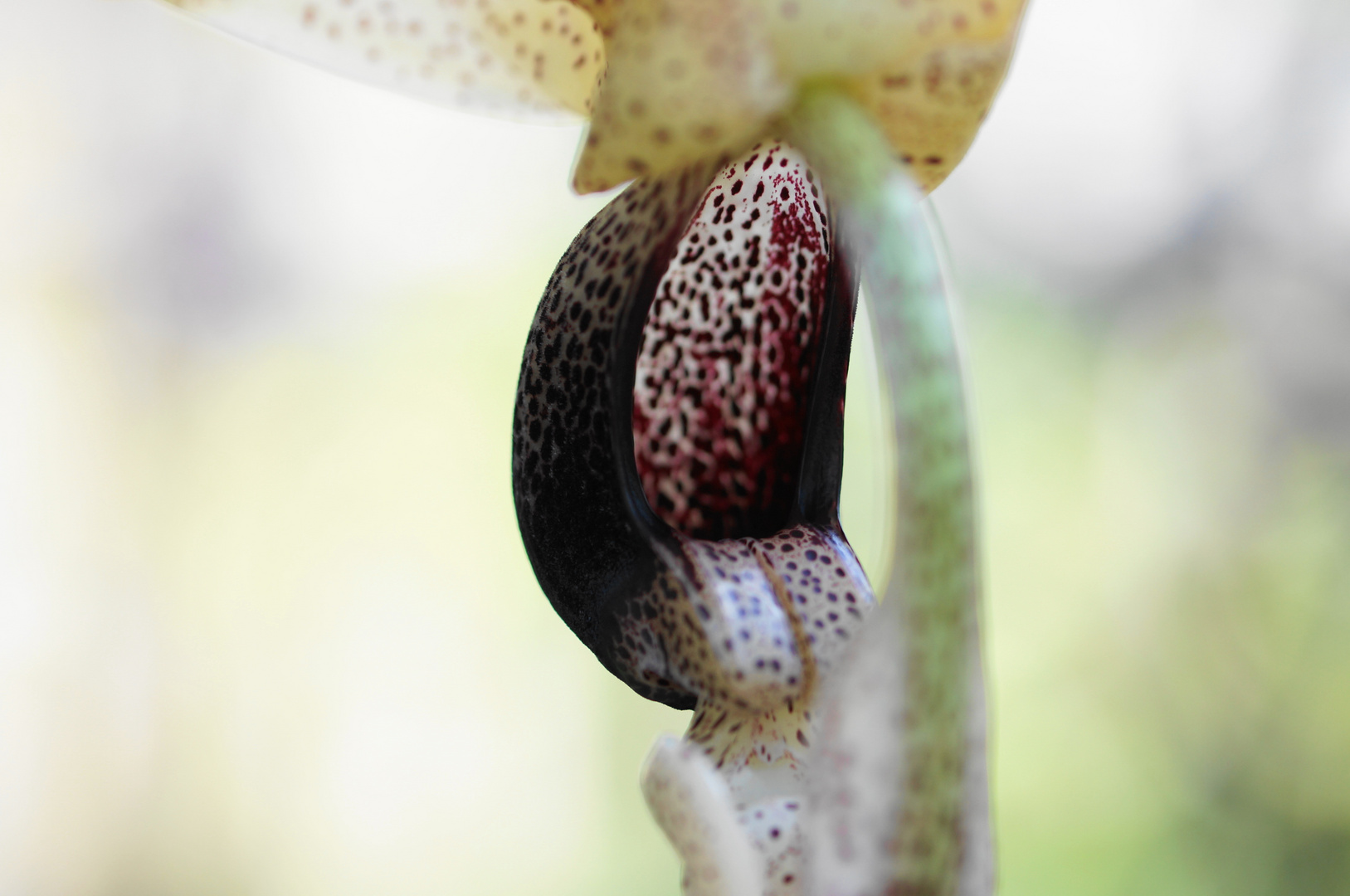 The secret life of plants 2
