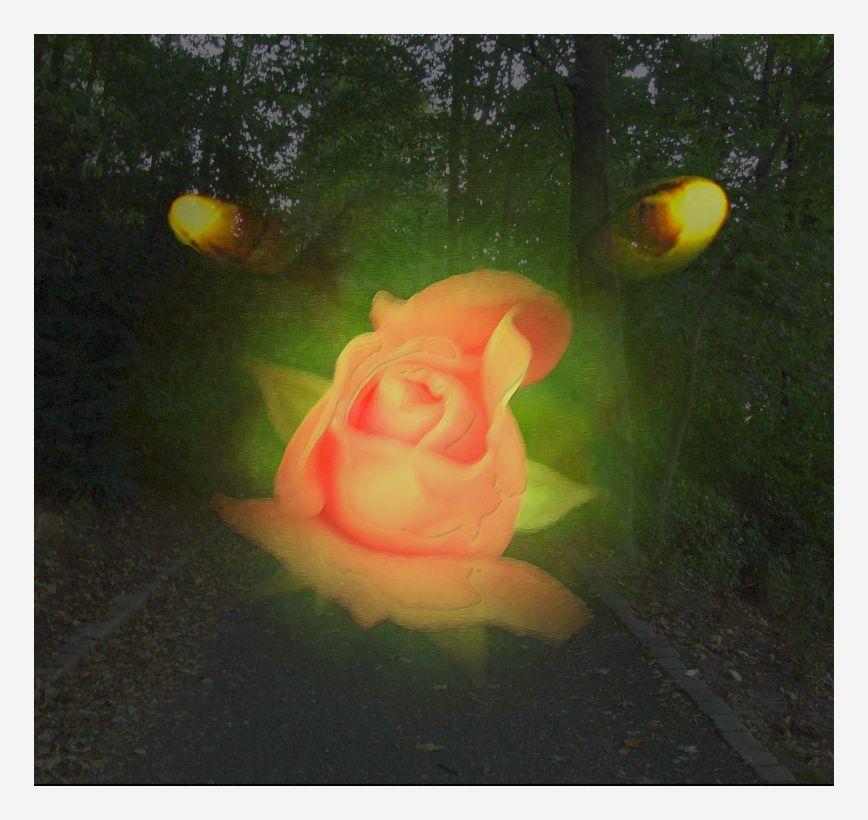 The Secret of a Rose II