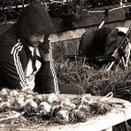 the seller of garlic