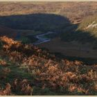 the shadow of brough law