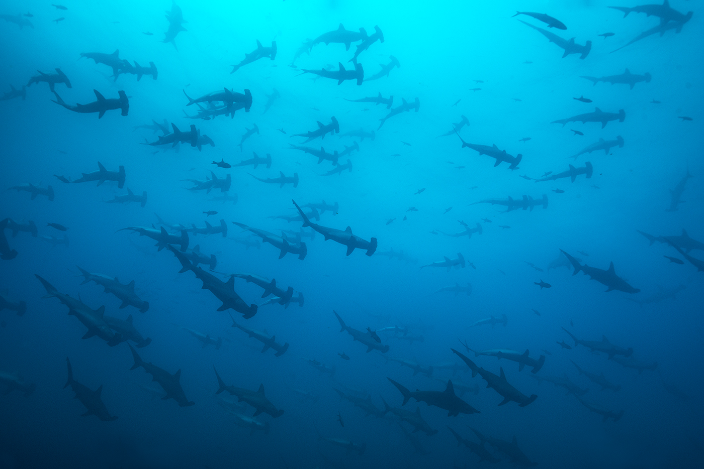 The shadows from Malpelo...