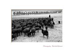 The Shepherd #1