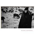 The Shepherd #3