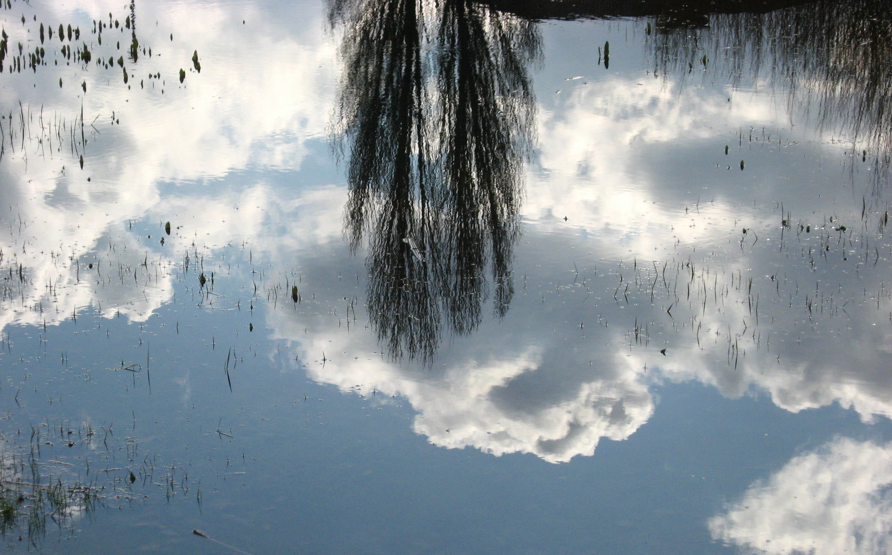The sky in the water