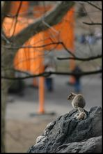 The Squirrel & The Gates II