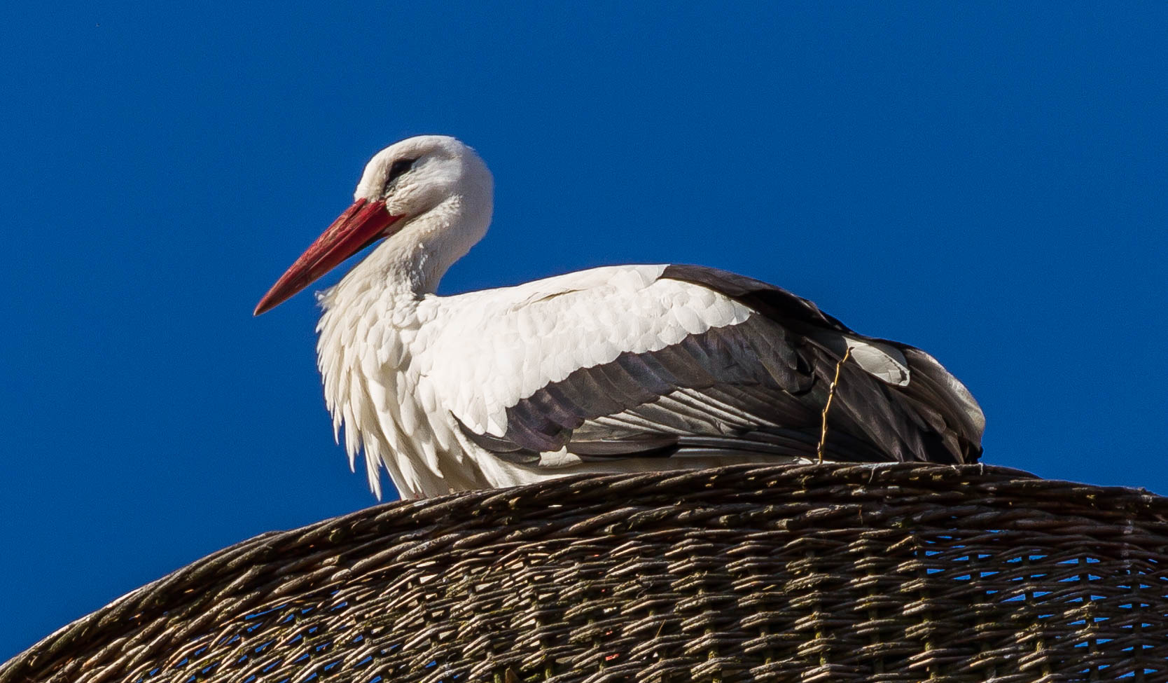 The Storch is waiting....