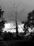 The Storm and The Tree