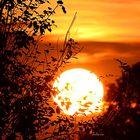 The Sun behind the Bush