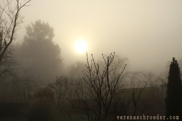 the sun looks through the fog in the morning